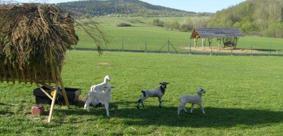Farma Papradno